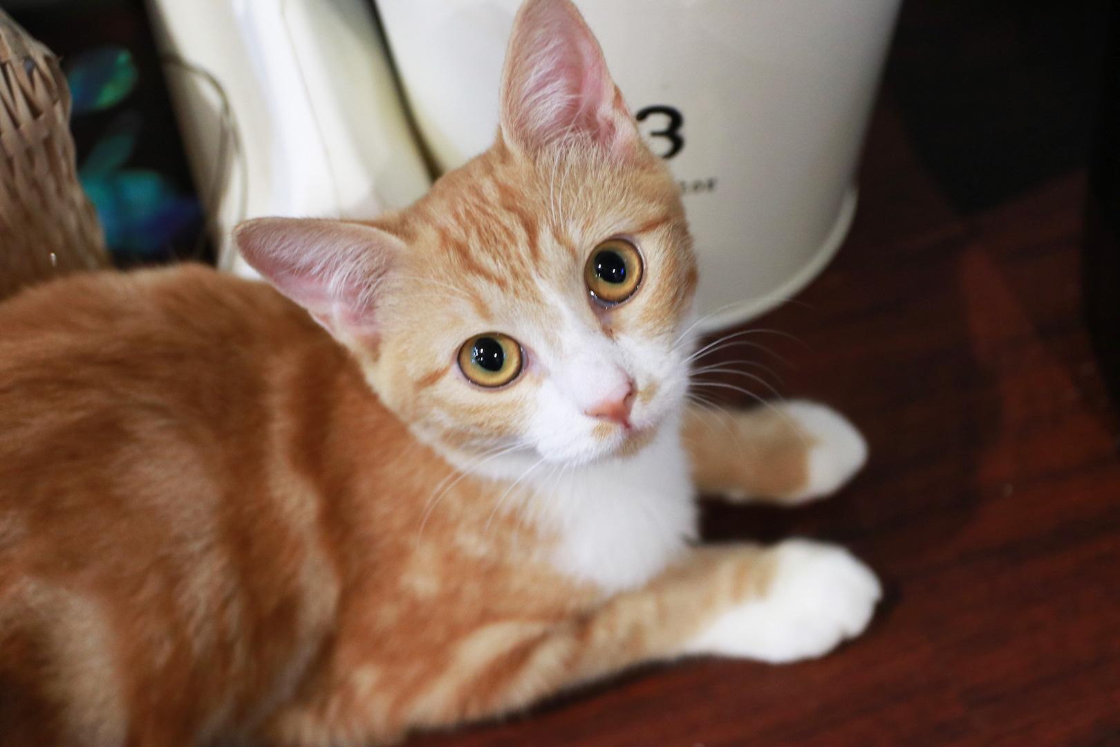 """株式会社ネコリパブリック/""""猫のために""""を追求する、人と猫の国家。"""